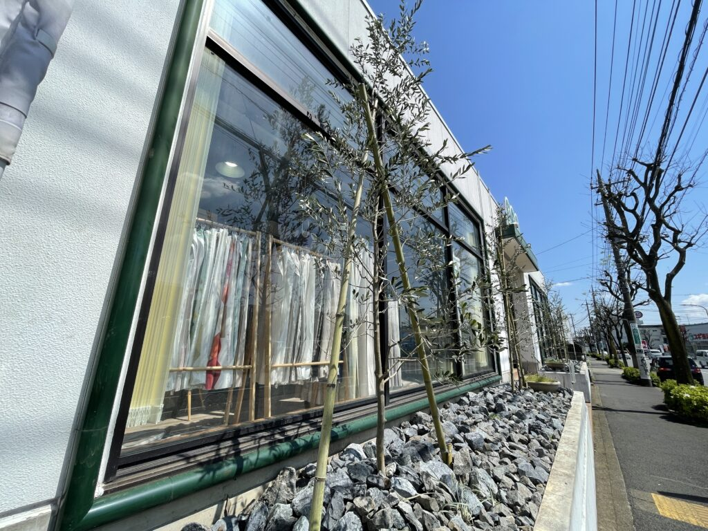 カーテンショップ森の風-花壇-オリーブ-シルバードラゴン-セダム02